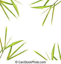 Bamboo Border - Bamboo leaves forming a border, over white...