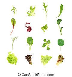 salada, alface, folhas