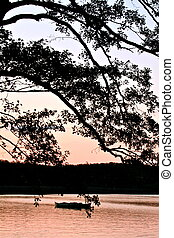 lake bank in the set - a lake bank in the sunset on a summer...