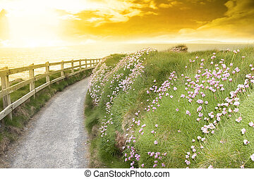 wild flowers along a cliff walk path in county Kerry Ireland