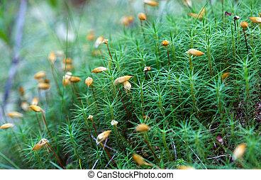 Green moss macro shot