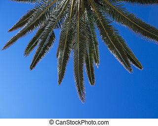 Palm tree against a clear blue sky - Part of a palm tree...