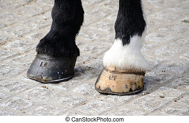 Horses hooves - The hooves are of vital importance for the...