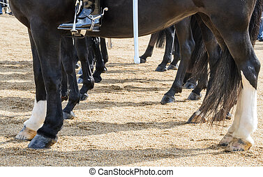 Horses legs and hooves - The hooves and legs are of vital...