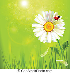 camomile - one big realistic camomile with ladybird