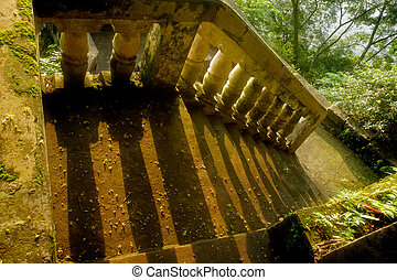 Stairs in green forest
