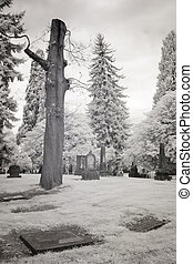 Infrared Photo of a Cemetery - Infrared photo of Lone Fir...