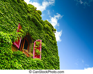Ivy and window - Antique brick facade covered in ivy with a...
