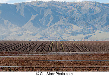 rich farm land with irrigation pipe - rows of cultivated...