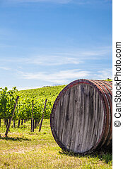 Tuscany wineyard - Italy, Tuscany region, Chianti area...