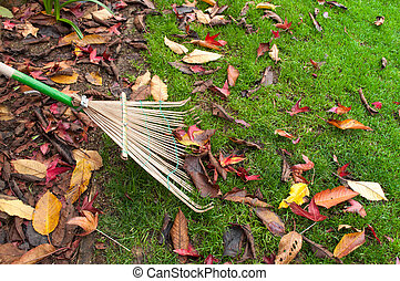 rake grass and leaves - rake standing isolated in backyard...