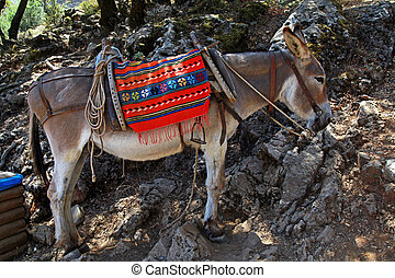 Greek donkey - typical greek donkey with multicolor saddle...