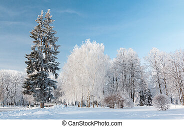 Urban winter landscape Yaroslavl, Russia - Trees powder with...