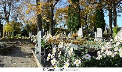 marguerite flower grave