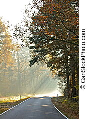 september morning - sunlight on a foggy autumn morning