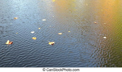 autumn leaf fall water