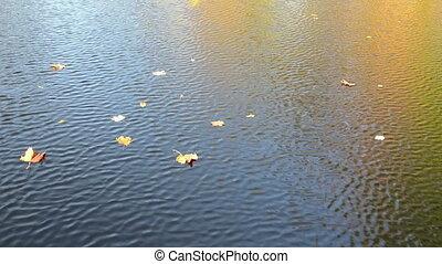 autumn leaf fall water