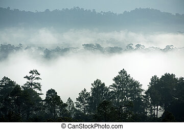 Tropical forest morning fog