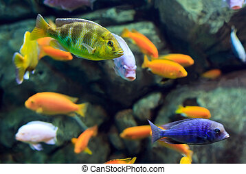 image of a tropical Fish on a coral reef underwater