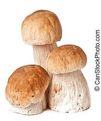 boletus edulis - The boletus edulis isolated on white...