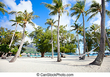Beach on Bora Bora - Beautiful beach with coconut palms on...