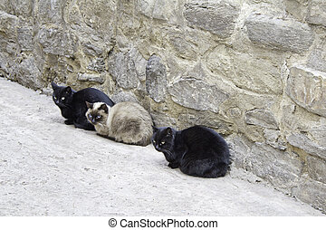 Three cats sitting on the floor of the street, nature and...