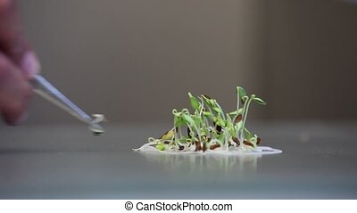 Counting and selecting germinating - Counting and selecting...