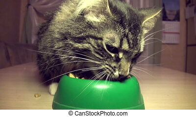 The cat eats a forage - The cat eats a dry feed from a bowl