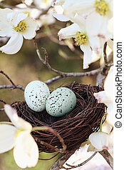 Springtime Nest - Painterly image of two eggs in a small...