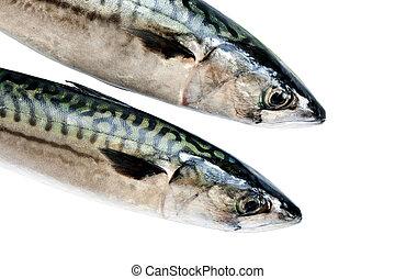 Mackerel on white - Two fresh mackerel isolated over white...