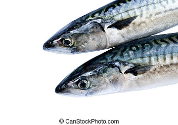 Mackerel - Two fresh mackerel isolated over white background