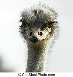 Head of ostrich in zoo Sigean, France