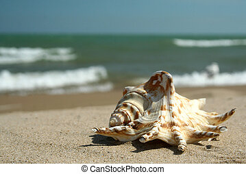 Sea Shell on the Bright Summer day - Happy summer day on the...