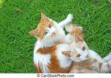 gatos, dos
