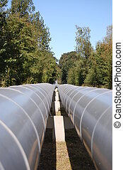 pipeline - A gray pipeline crossing an old forest