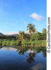 Coconut tree with blue sky and reflection