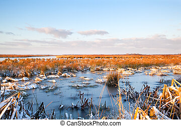 frozen swamp in Drenthe