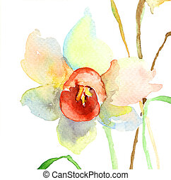 Narcissus flowers Watercolor illustration