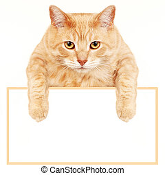 Cat with banner. - Ginger Cat isolated over white...