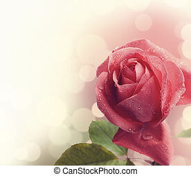 Pink Rose - 	Beautiful pink rose with water drops