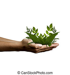 human hands with natural plants