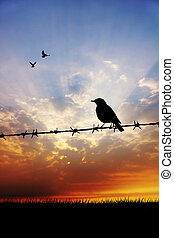 sparrow at sunset - bird on barbed wire