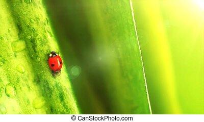 Ladybug on the flowers leaves