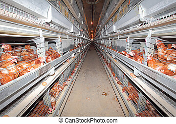 Chicken farm - interior