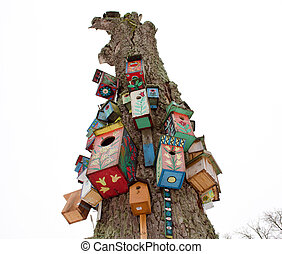 old dead tree trunk colorful bird nest box hang - various...