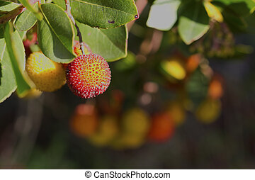 Arbutus - A beautiful arbutus