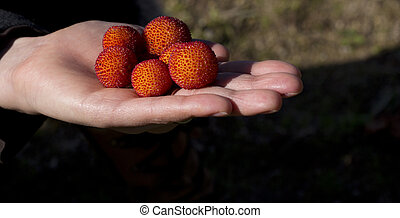 Arbutus - A handfull of arbutus fruits.