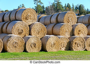 Hay Bails from Side - Multiple hay bails arranged in...