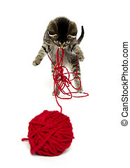 cute tabby kitten with yarn - Cute baby tabby kitten playing...