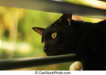 Black Cat At Window - black cat starring and looking out...